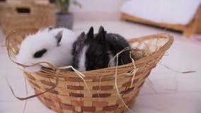 Pequeño conejo blanco decorativo que se sienta en la cesta La celebración de Pascua almacen de metraje de vídeo