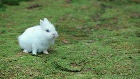 Pequeño conejo blanco en musgo verde almacen de video