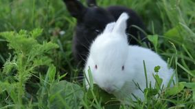 Pequeño conejo en hierba verde en día de verano metrajes