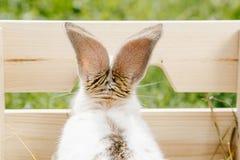 Pequeño conejo en la caja Fotos de archivo libres de regalías