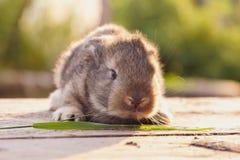 Pequeño conejo en los tableros de madera Imagen de archivo libre de regalías