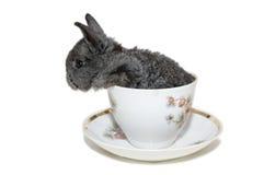 Pequeño conejo gris en la taza blanca fotos de archivo
