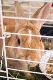 Pequeño conejo lindo Fotografía de archivo libre de regalías