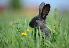 Pequeño conejo negro imagenes de archivo