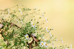 Pequeño crecimiento de flores a lo largo de los bancos del río imágenes de archivo libres de regalías