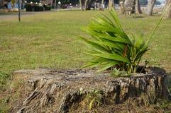Pequeño crecimiento del árbol en el viento Foto de archivo libre de regalías