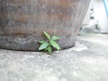 Pequeño crecimiento vegetal debajo del tarro grande Fotos de archivo