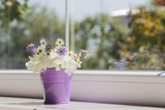 Pequeño cubo púrpura con las margaritas cerca de la ventana Fotos de archivo