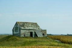 Pequeño edificio resistido al lado de un campo de maíz en Dakota del Norte imagen de archivo