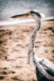 Pequeño Egret (Egretta Garzetta) en Egipto Imágenes de archivo libres de regalías