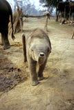 Pequeño elefante cómodo foto de archivo libre de regalías