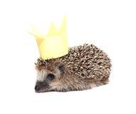 Pequeño erizo del bosque con una corona en la cabeza aislada Fotos de archivo libres de regalías