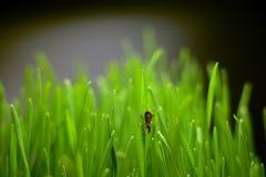 Pequeño escarabajo en la hierba verde imagenes de archivo