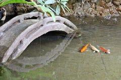 Pequeño estanque de peces del koi fotos de archivo