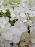 Pequeño flor blanco fotos de archivo