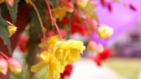 Pequeño fondo amarillo de la gente de flores almacen de metraje de vídeo