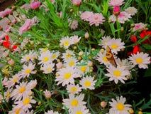 Pequeño fondo de las flores Imagen de archivo libre de regalías