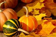 Pequeño fondo de las hojas de otoño de las calabazas de los stripeds de la acción de gracias Imagen de archivo