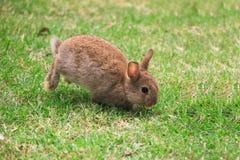 Pequeño funcionamiento del conejo imagen de archivo