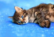 Pequeño gatito Imágenes de archivo libres de regalías