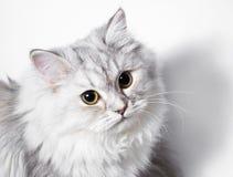 Pequeño gatito Imagen de archivo