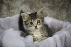 Pequeño gatito Fotos de archivo
