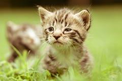 Pequeño gatito adorable Foto de archivo