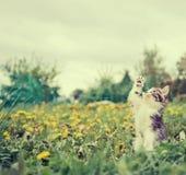 Pequeño gatito al aire libre imagen de archivo libre de regalías