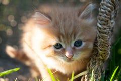 Pequeño gatito anaranjado dulce Foto de archivo libre de regalías