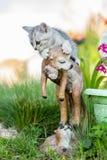 Pequeño gatito arena-coloreado en hierba verde Imagenes de archivo