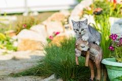 Pequeño gatito arena-coloreado en hierba verde Imágenes de archivo libres de regalías