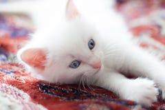 Pequeño gatito blanco que miente y que mira cuidadosamente en la distancia Fotografía de archivo libre de regalías