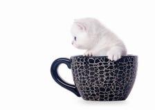 Pequeño gatito británico de plata en taza fotos de archivo