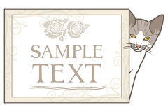 Pequeño gatito con el marco Imagen de archivo