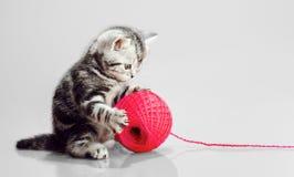 Pequeño gatito con el ovillo Imagen de archivo libre de regalías