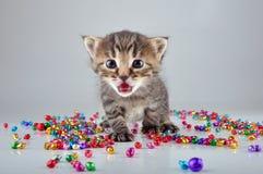 Pequeño gatito con las pequeñas gotas de los cascabeles del metal Imagenes de archivo