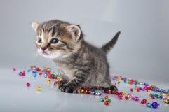 Pequeño gatito con las pequeñas gotas de los cascabeles del metal Fotos de archivo libres de regalías