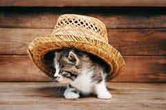 Pequeño gatito de la curiosidad Imagen de archivo libre de regalías