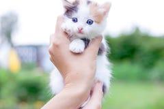 Pequeño gatito de Trekhchastny a mano Imagen de archivo libre de regalías