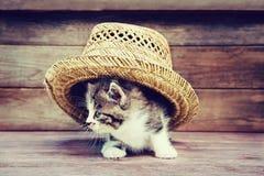Pequeño gatito debajo del sombrero fotografía de archivo libre de regalías