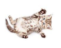 Pequeño gatito del bebé que miente encendido detrás Foto de archivo libre de regalías