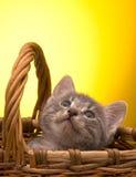 Pequeño gatito divertido Fotografía de archivo