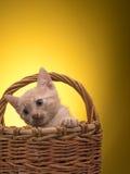 Pequeño gatito divertido Imagen de archivo