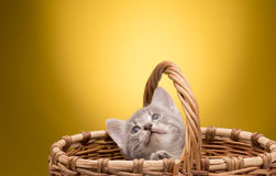 Pequeño gatito divertido Imágenes de archivo libres de regalías