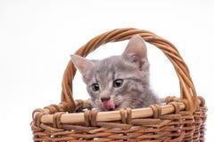 Pequeño gatito divertido Imagenes de archivo