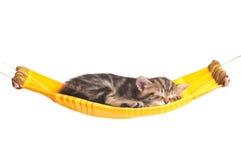 Pequeño gatito dormido fotografía de archivo libre de regalías