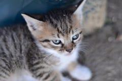 Pequeño gatito dulce fotografía de archivo
