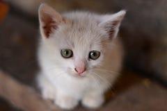 Pequeño gatito dulce fotografía de archivo libre de regalías