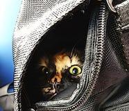 Pequeño gatito en bolso con los ojos grandes Foto de archivo libre de regalías
