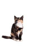 Pequeño gatito en el blanco Foto de archivo libre de regalías